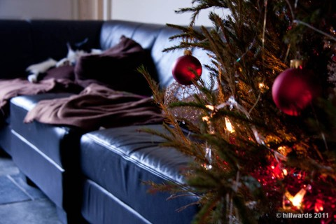 Slumbering cats on sofa behind Christmas tree baubles