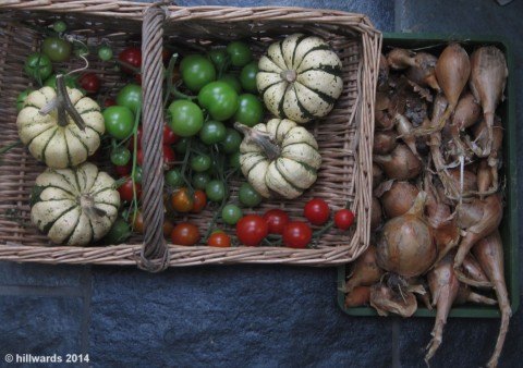 Last harvests
